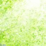 緑 グリーン キラキラ