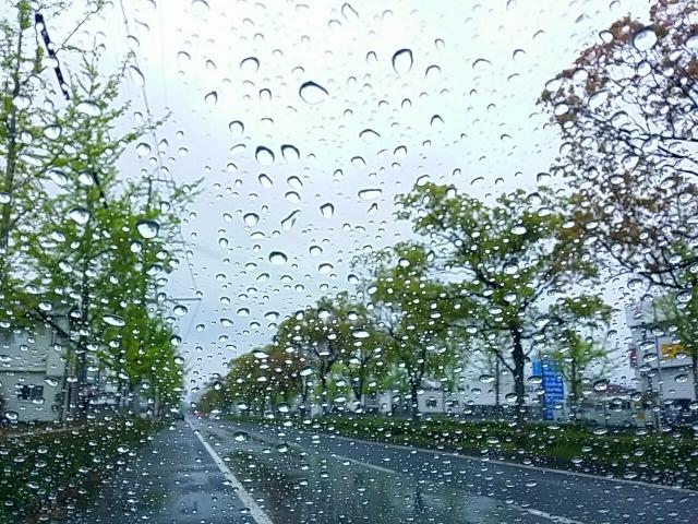 雨に打たれる街路樹